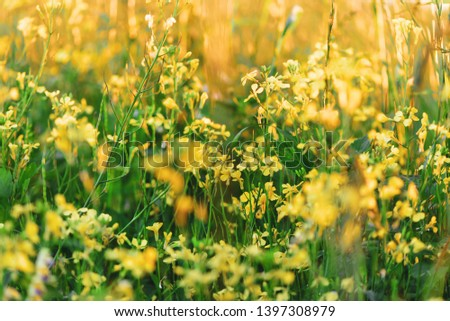 Summer yellow flowers and different herbs on the meadow. Wildflower meadow, flower meadow, wildflowers. Summer nature backgrounds. #1397308979