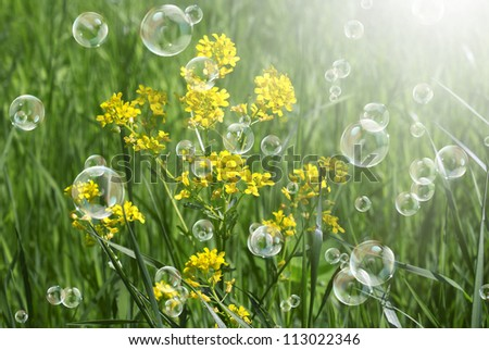 Summer  yellow flowers with green grass.Nature background