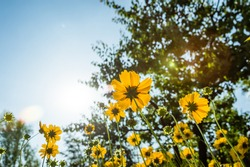 Summer yellow flowers with sunlight and tree background