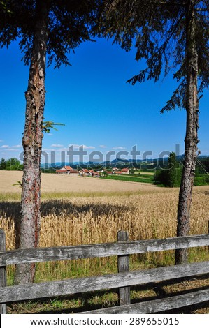 Summertime countryside landscape with yellow wheat ready to be harvested, rural scene