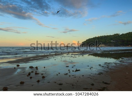 Summertime.Gargano coast:Portonuovo beach (Vieste): waves breaking on sandy shoreline after sunset. Apulia,ITALY. Low tide: solitary seagull flying on sandy shore at dusk. - Shutterstock ID 1047284026