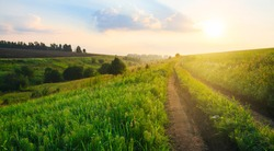 Summertime.Hazy summer morning.Calm weather.Sunny summer landscape with ground country road passing through the fields,green hills and pastures at sunrise.Dew in the fresh green grass along the road.