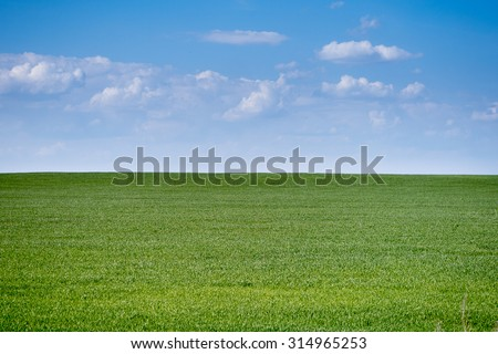 Summertime simple meadow landscape. Sunny calm weather.