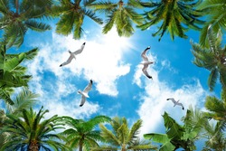 sun and cloudy sky, palm trees and doves