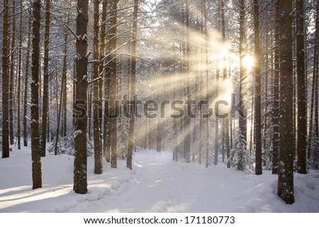 Sun Snow