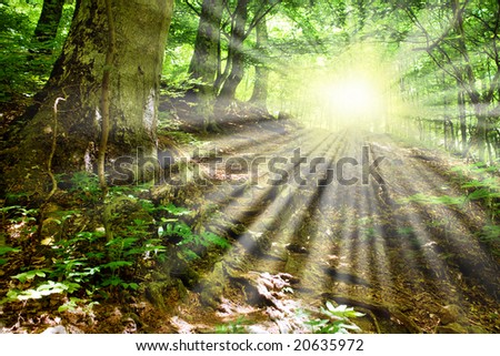 Sun beams and  mountain road which was surrounded in the fresh green