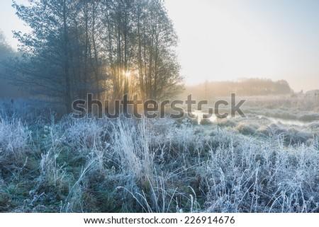 sun beams and trees