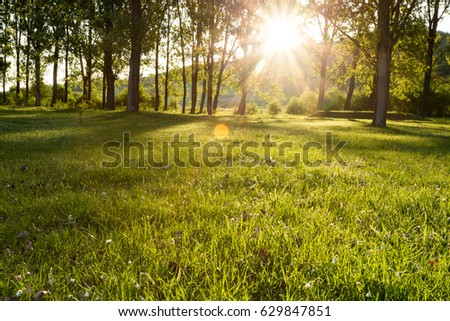 sun beams in the forest   - Shutterstock ID 629847851