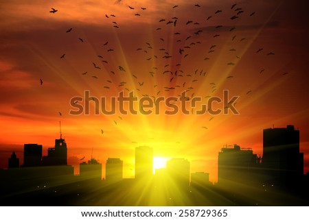 sun beams Silhouettes Sunset in the City and The flying bird.