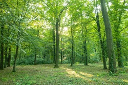 Sun beams through thick trees branches in dense green forest. Beautiful nature forest scenery, tranquil soft colors. Peaceful bright natural landscape, spring summer greenery and freshness
