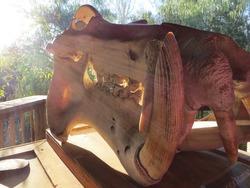 Sun Beams through Trees and Over a Hippopotamus Skull