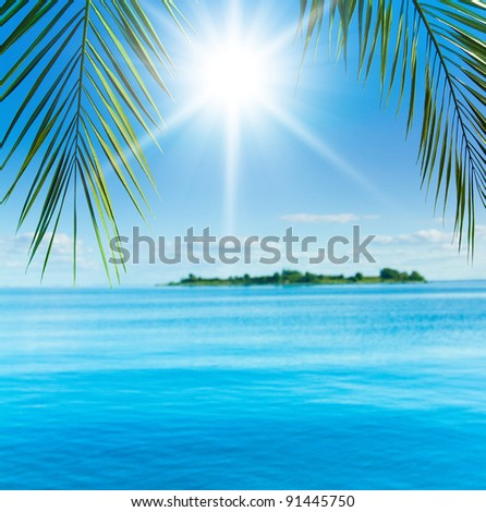 Sun between Branches Tropical Sunshine