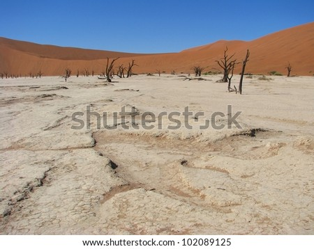Sun burnt land with dead trees in Deadvlei (Death valley), Sossusvlei, Namib-Naukluft National Park of Namibia