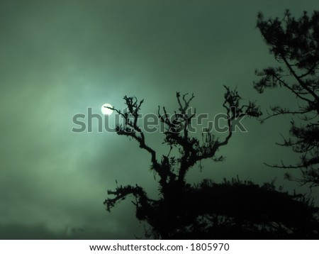 Sun coming out in a foggy morning stock photo