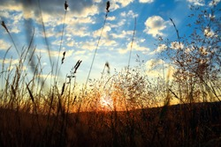 Sun downer in a field