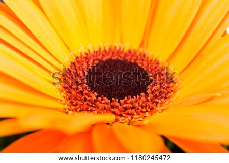 sun flower studio close up #1180245472