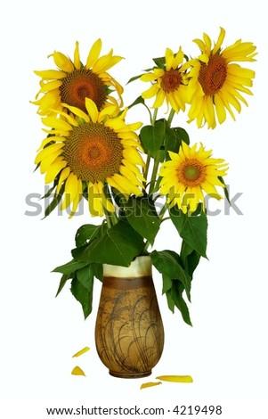 Sun-flowers in vase