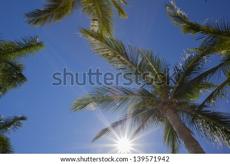 Sun gleaming through palm trees