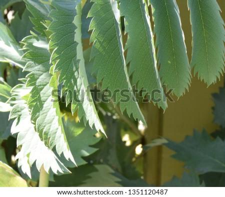 Sun glistening on healthy green leaves