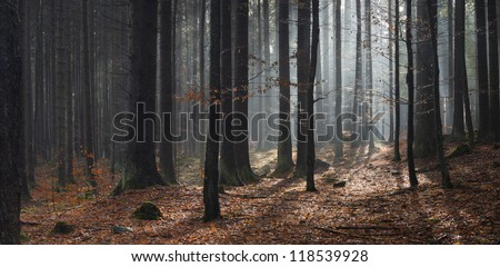 sun in forest at fall, autumn panorama