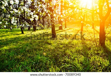 Sun in spring flowers and green grass