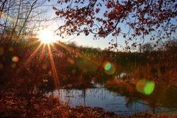 Sun in the woods; shining; springbreak