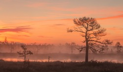 Sun is rising above the fog engulfed bog. Foggy marshland scene in the early morning with pine forest in Estonia.