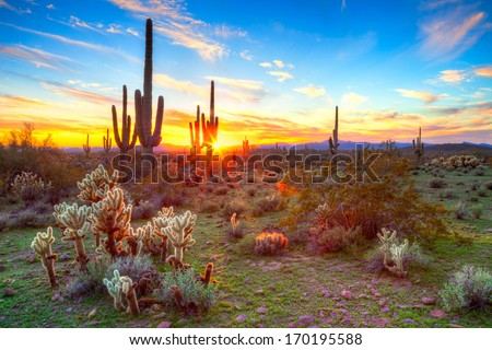 Sun is setting between Saguaros, in Sonoran Desert.