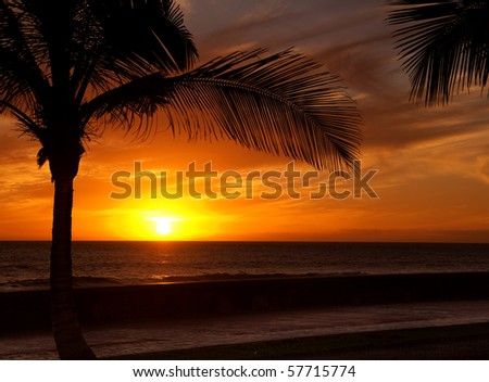 Sun is setting in the ocean, a palm tree silhouette in front