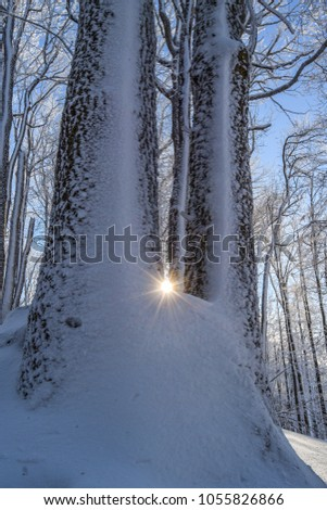 sun is shining during a cold day in winter time, Hungary Stock fotó ©