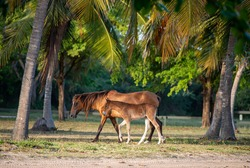 Sun kissed sand and horses in the beach of Puerto Rico