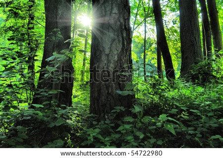 sun light in green forest