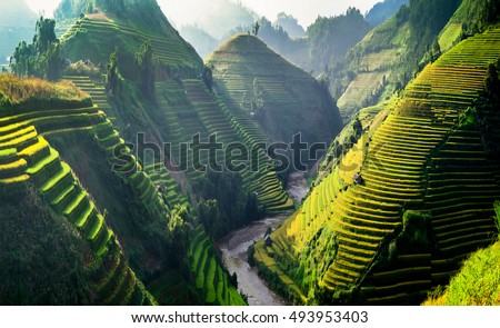 Sun light on terraces rice fields. rice fields in Northwest of Vietnam. ストックフォト ©
