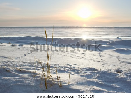 sun low above snow coast of the sea; Baltic Sea, Russia