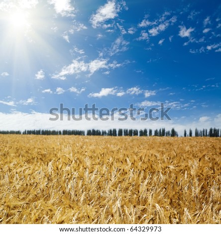 sun over field with wheat