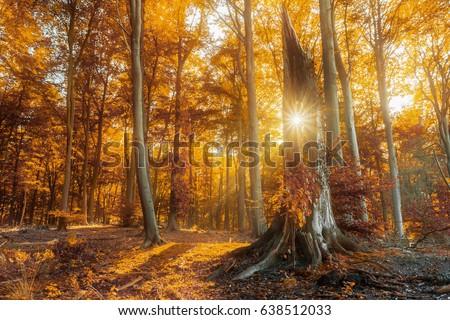 Sun peaking through a tree bark. - Shutterstock ID 638512033