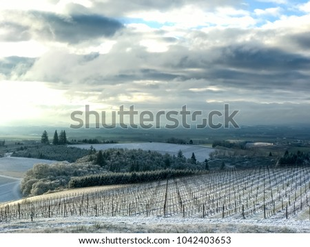 Sun picks out the edge of a snow covered slope in an Oregon vineyard, under a cloudy sky in morning light. #1042403653