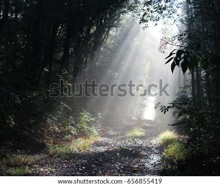 Sun rays #656855419