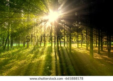 sun rays #665888578