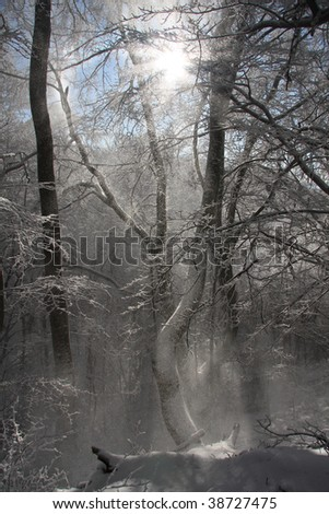 sun rays against winter forest