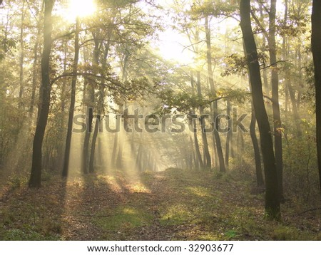 Sun rays crossing a misty forest photographed in an early autumn morning.