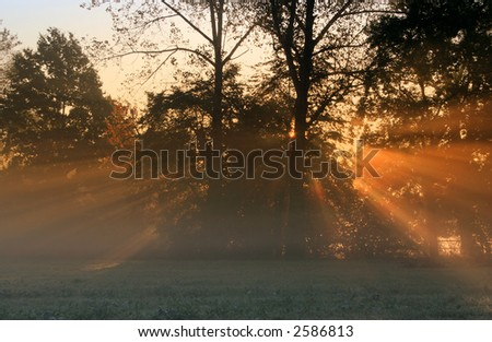 Sun rays crossing a misty trees photographed in an early autumn morning.