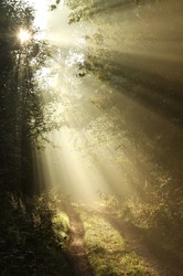 Sun rays falling on the path in the deciduous forest on a foggy autumn morning.