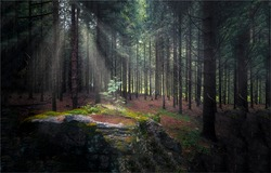 Sun rays in a dark forest. Misty forest sunbeams. Sunbeam forest mist. Sunbeams in dark forest