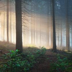 Sun rays in a dark misty forest. Osnabruck, Gemany