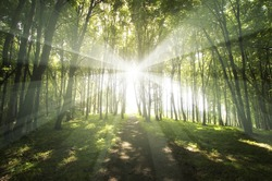 sun rays in a green forest in spring