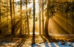 Sun rays in a shady forest. Forest sunbeams. Sunbeams in forest. Sunrays forest sunbeams