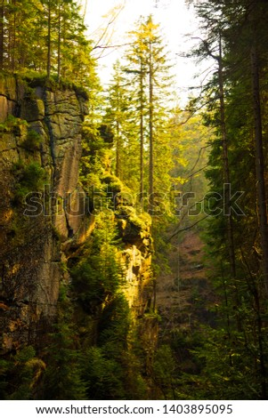 Sun rays in amazing mountain ravine full of pine trees in Poland