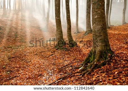 Sun rays in an autumn forest