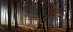 Sun rays in autumn forest